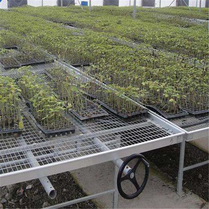 Seedling Bed Mesh- Galvanized Welded Mesh Sheets